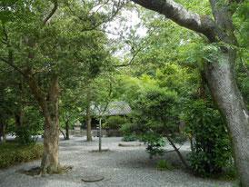 静寂な庭木立