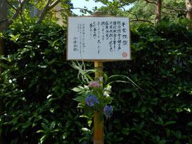 平家物語で有名な、沙羅双樹の花