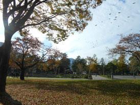 公園中を見る