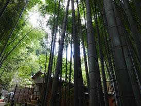 竹林と茶屋休耕庵