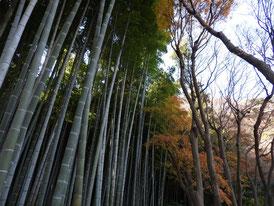 12月の竹林