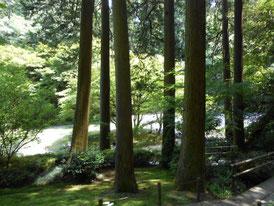 境内の樹木