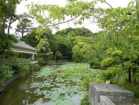 平家池、左は風の杜