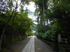 緑深き参道