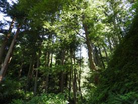回春院奥の木立
