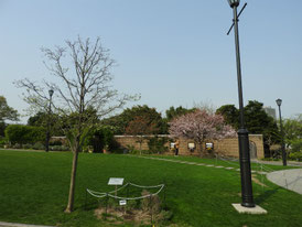 公園内広場