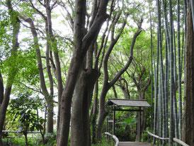 書院から竹林へ
