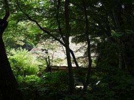 仏殿から見る旧矢箆原家合掌住宅