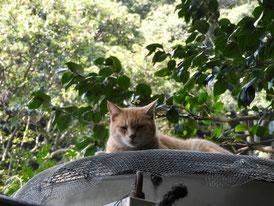 境内奥の水桶置き場の猫