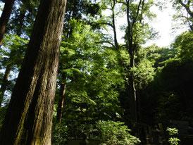 墓苑の木立