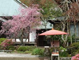 トレードマークの赤い笠と花海棠