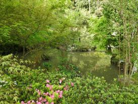 本堂左の庭園と池 躑躅が満開でした