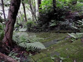 法華堂から苔石段を望む