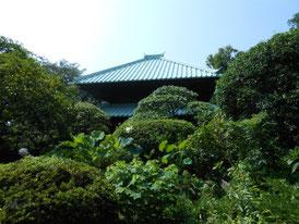 樹木に包まれる仏殿の寄棟屋根