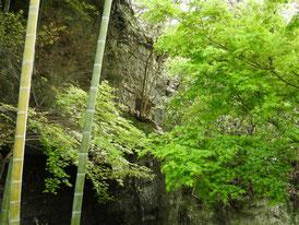 底脱ノ井の横の洞穴と竹