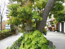 八幡宮に行く通りの植栽オブジェ
