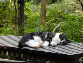 円覚寺 桂昌庵の猫