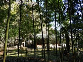 竹林と書院