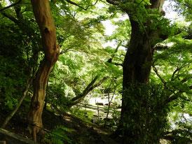 境内の石段から庭園