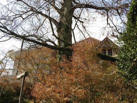 紅葉に包まれる石窯ガーデンテラス