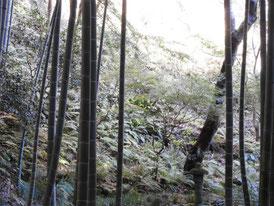 静けさに包まれる竹林