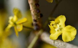 jardin des plantes, orchidées
