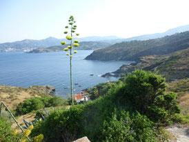 Küstenweg vom Cap Béart Richtung Paulille