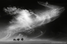 Thomas Finkler Photography, fine art black and white landscape photography, 3 trees, cloudscape, sky, grain field, minimalist, monochrome