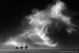 Thomas Finkler Photography, fine art black and white landscape photography, minimalist, 3 trees, cloudscape, sky, grain field, scenery, monochrome, poetic