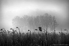 Thomas Finkler Photography, fine art nature black and white photography, trees, field, sunflowers, misty, november, poetic, minimal