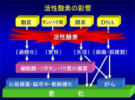 「日本老化制御研究所」より