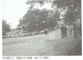 羊の群れに気療を行う。