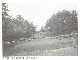 羊たちはバタバタと倒れた。