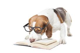 Lesender Beagle mit Brille
