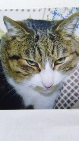 モモ(家のネコ)