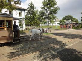 北海道開拓の村で馬車を引く白い馬