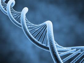 L'ADN de Cultivateur Bio Doede de Jong doit etre détruit des data banque de la Justice.