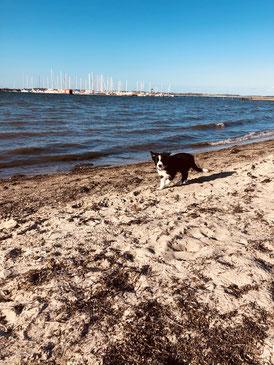 Sami am Strand