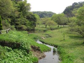 豊かな自然が残る「池子の森自然公園」