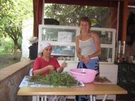 wild portulak salad