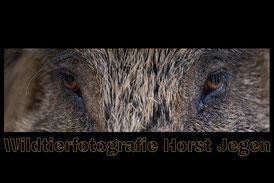 https://www.wildtierfotografie-jegen.de/