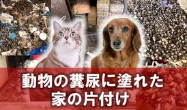 動物|犬|猫|ゴミ屋敷|糞尿|排泄物|片付け|清掃|クリーニング