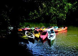 西表島で人気のあるカヌー。夏場には川が埋まるほどのカヌーが係留されることもある(資料写真)
