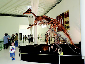 同展示入口にあるサウロロフス(奥側)とプロバクトサウルスの骨格