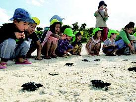 園児の声援を浴びながら海に向かって歩きだす子ガメたち=19日午前、コンドイビーチ