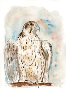 Gerfalke, weißer Gerfalke, Falke, falcon, Aquarell, Krafttier, winsor and newton, lanaquarell