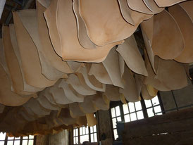 Cuirs accrochés pour l'ultime séchage avant la commercialisation
