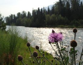 Geocaching in den Rocky Mountains: Kurzer Abstecher vom Trans Canada Highway zum Cachen am Fluss.