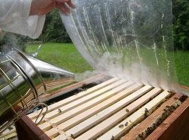 Mit einem Smoker werden leichte Rauchstöße in das Bienenvolk gegeben, damit diese sich in Wabengassen zurückziehen