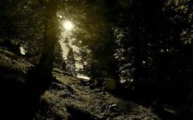 Berge , Alpen , Steig , Weg , Natur , Landschaft , Wandern , Hüttentour , Bergwandern , Tirol , Österreich , Otto-Mayr-Hütte , Wald , Sonne , Morgen